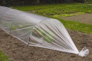 small cloche made from polythene sheeting